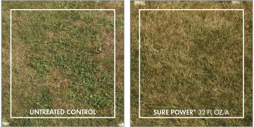 Sure Power broadleaf weed control