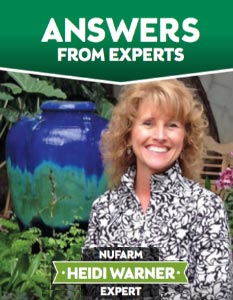 Ask An Expert: Heidi Warner
