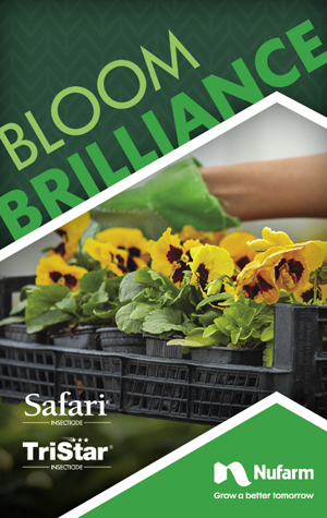 Bloom Brilliance Brochure